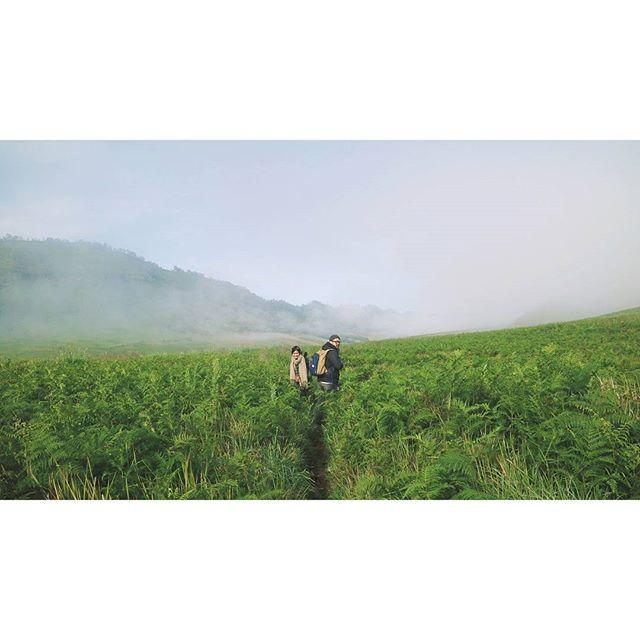 Bukit Teletubies / Padang Savana
