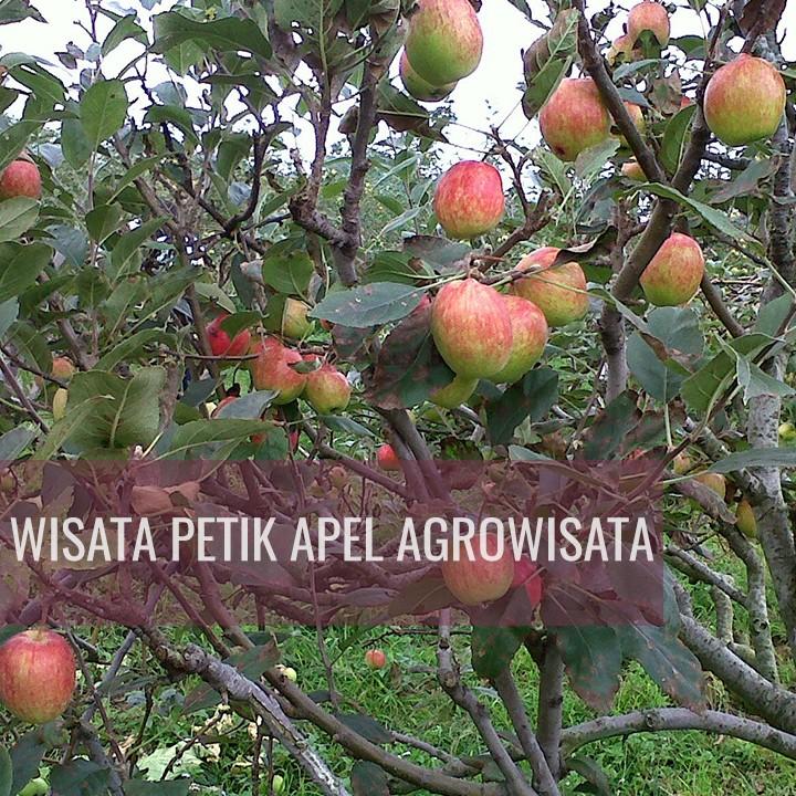 PAKET WISATA MALANG BATU AGRO WISATA